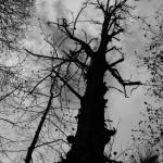 h_Cyklus Černobílé kouzlo (11)